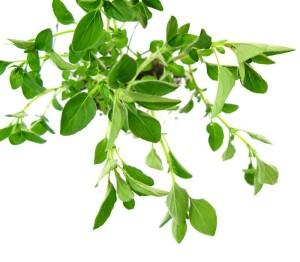 Cómo Curar la Artritis con Plantas Medicinales