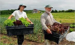 Los Alimentos Orgánicos son más Beneficiosos para la Artritis
