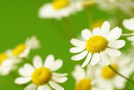 Las Mejores Plantas Desinflamatorias Para la Artritis