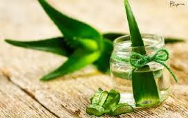 Planta Natural para Curar Artritis de Forma Natural