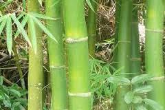 Plantas Medicinales para la Artrosis: Cómo Consumirlas