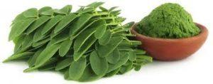 Plantas Medicinales para la Artrosis de Manos: Moringa y Cúrcuma