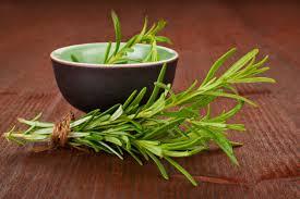 Plantas Medicinales para la Artrosis Degenerativa: Romero y Abedul