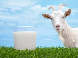 Is Goat Milk Good for Rheumatoid Arthritis?